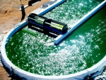 The just-released 2016 National Algal Biofuels Technology Review captures the exciting achievements of the field of algal biofuels, as well as articulates new challenges, lessons learned, and critical next steps.   Photo courtesy of Sapphire, Las Cruces