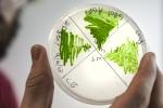 Cyanobacteria cultures. Photo by Dennis Schroeder/NREL.