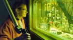 A chemist operates a remote manipulator arm in a radiation-shielded cell
