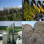 Biofuels are produced in a biorefinery (bottom left) from feedstocks such as corn stover (bottom right) and switchgrass (top left).