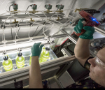 algae research at national renewable energy laboratory