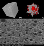 3-D renderings (A and B) and scanning electron image of foamed cement.