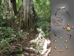 Data Dive: How Microbes Handle Poor Nutrition in Tropical Soil