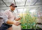 How Does Your Garden Grow? Study Identifies Instigators of Plant Growth