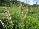 Elevated Carbon Dioxide Suppresses Dominant Plant Species in a Mixed-Grass Prairie
