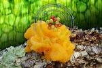 Diverse Fungi Secrete Similar Suite of Decomposition Enzymes