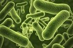 Scientists Rewrite Bacteria's Genetic Code