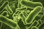 Scientists Rewrite Bacteria's Genetic Code