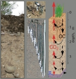 Microbial Activity in the Subsurface Contributes to Greenhouse  Gas Fluxes