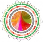 Understanding the Rice Genome for Bioenergy Research