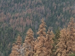 Tree Mortality and Droughts: A Global Perspective