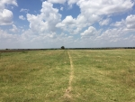 How Grasslands Regulate Their Productivity in Response to Droughts