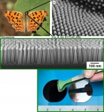 Artificial Moth Eyes Enhance Silicon Solar Cells