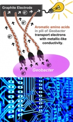 Bacteria Hairs Make Excellent Electrical Wires