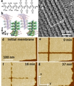 New Thin Membranes Can  Self-repair Following Damage