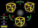 Molecular Mousetraps Capture More Nuclear Waste