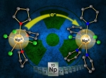 Opening Access to Explore the Synthetic Chemistry of Neptunium
