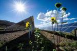 Snapping the Sun: 5 Tips for Capturing Compelling Solar Power Photos