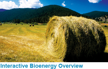 Interactive Bioenergy Overview