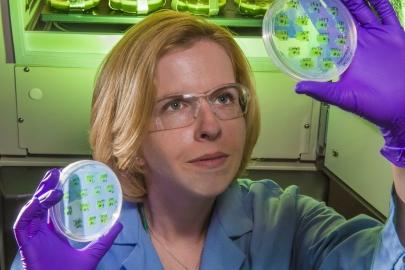 Engineer studies modification of algae for biofuel production.   Photo courtesy of Sandia National Laboratories