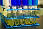 Algae samples back at the NREL lab, ready to be analyzed and run through the Fluorescent-Activated Cell Sorter, or FACS, which separates the cells. | Credit: NREL Staff Photographer Dennis Schroeder.