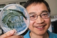NREL researcher Dr. Jianping Yu holds a sample of cyanobacteria. Photo courtesy Dennis Schroeder/NREL.