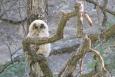 Oak Ridge recognized for bird protection practices